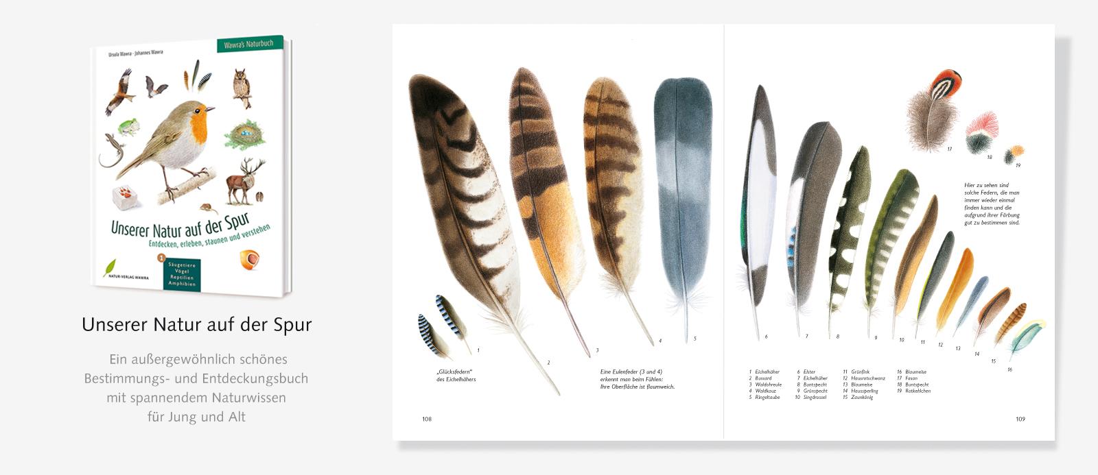 Slider-Naturbuch-Federn-2
