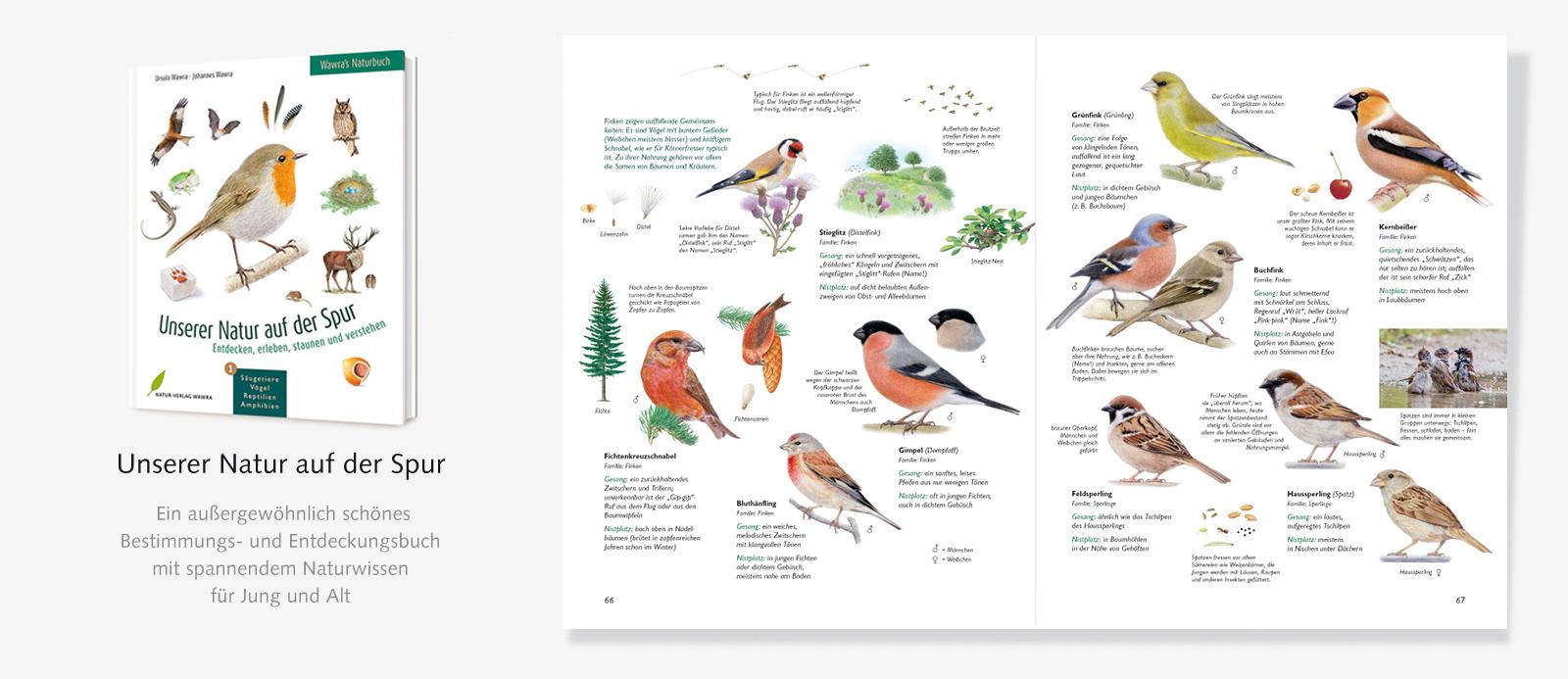 Slider-Naturbuch-Finken-1