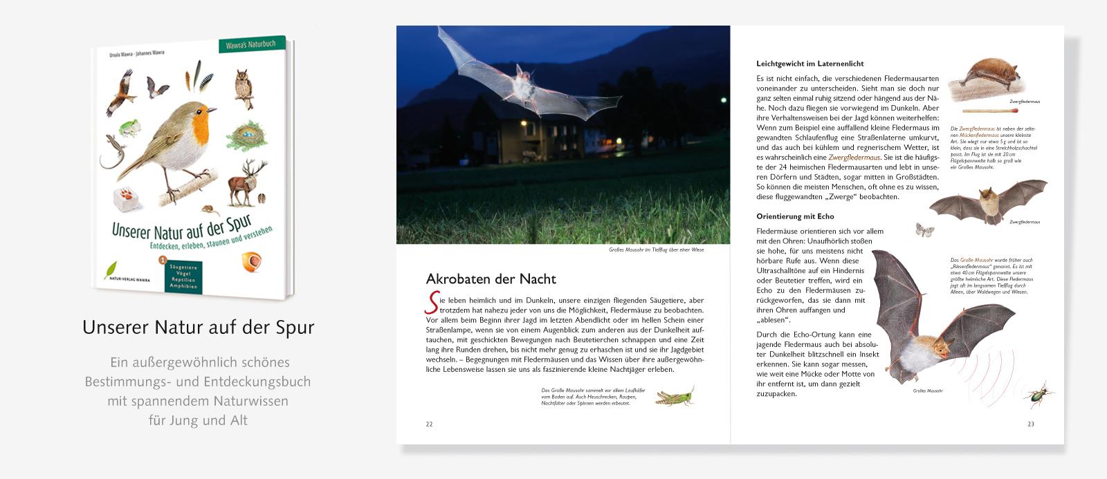 Slider-Naturbuch-Fledermäuse-1