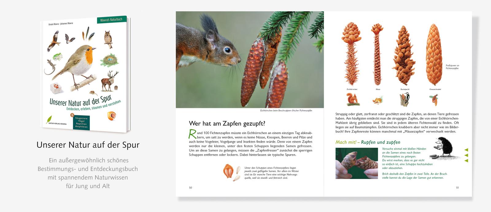 Slider-Naturbuch-Zapfen-1
